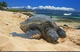 با لاکپشتهای ایران آشنا شوید